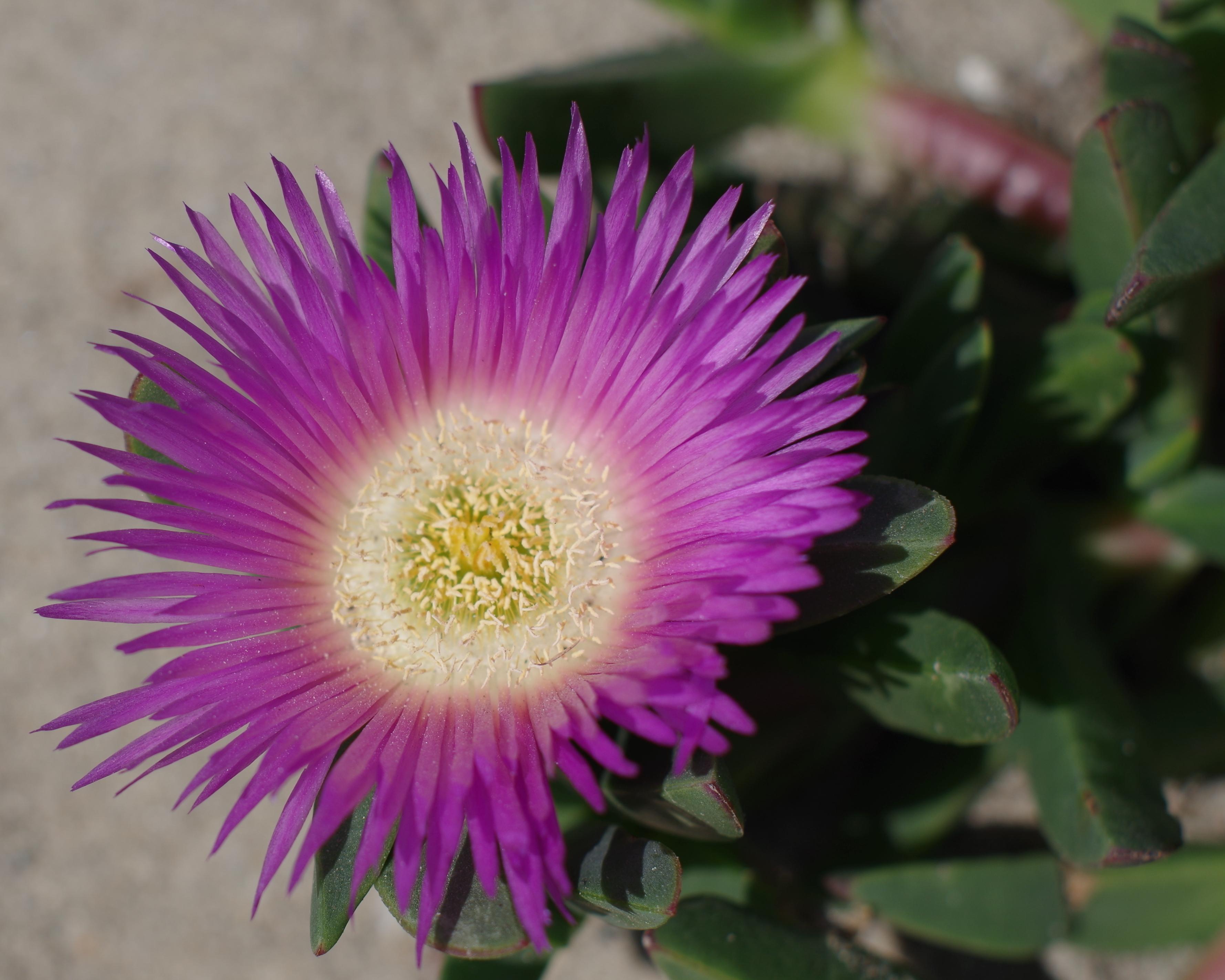 Pretty Pink Flowers Enjoy My Photography Jayesh Patel
