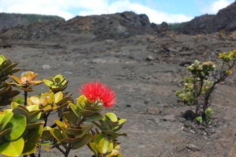 Volcano Park, Hawaii